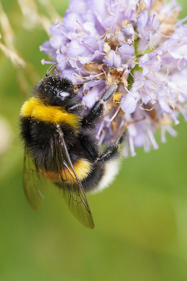 bumblebee sigma 70mm macro