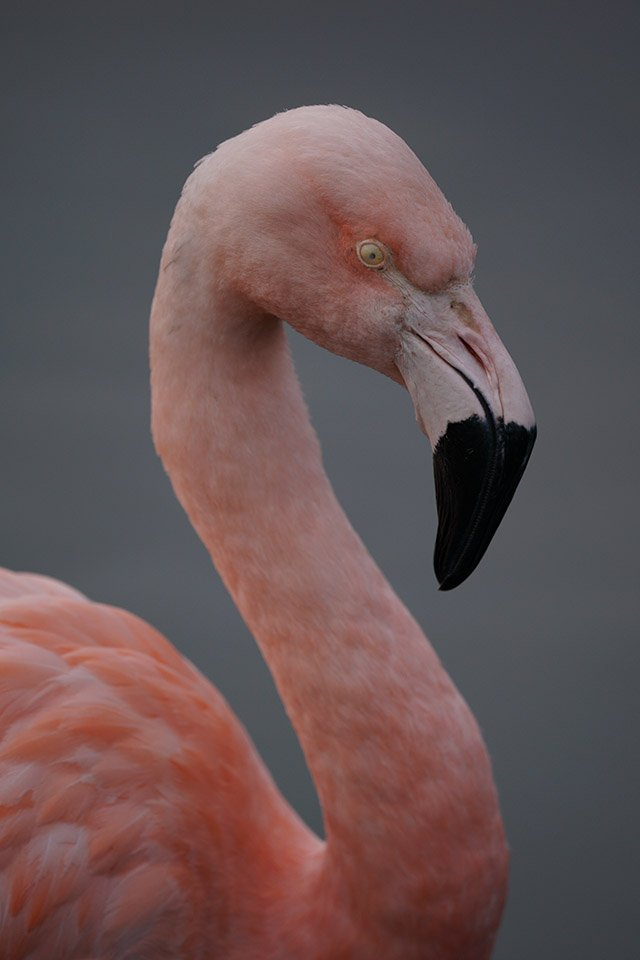 Flamingo Sigma 60-600 Sample Image Sony A9