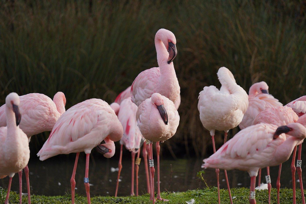 Flamingo Sigma 60-600 Sample Image Sony A7 III