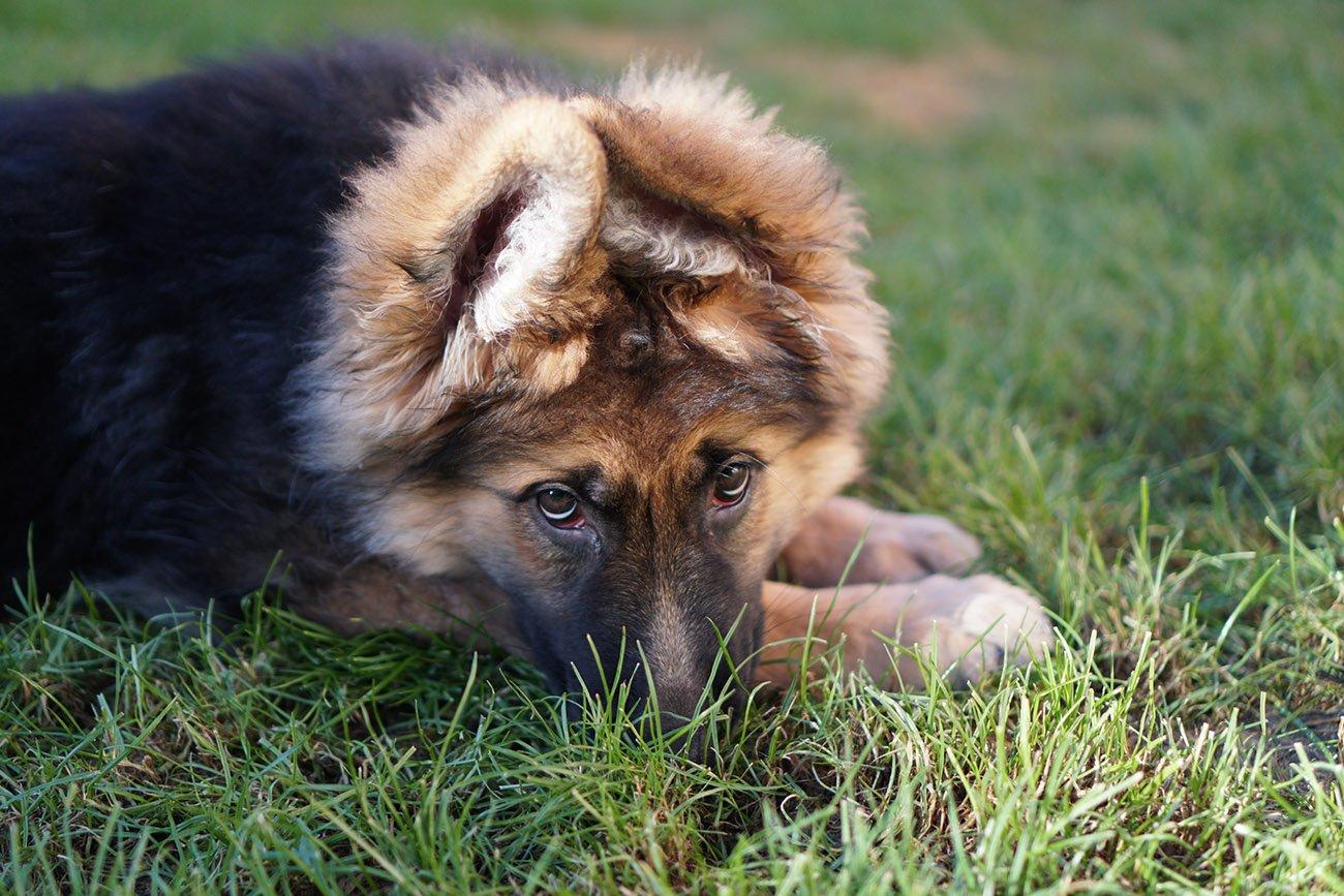 sony sel35f18 gsd puppy a6400