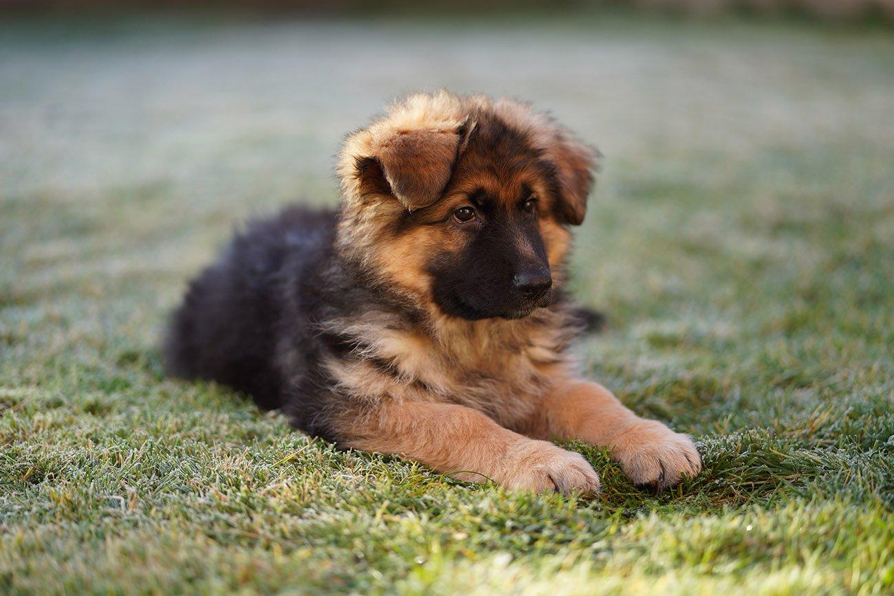 sony sel85f18 gsd puppy