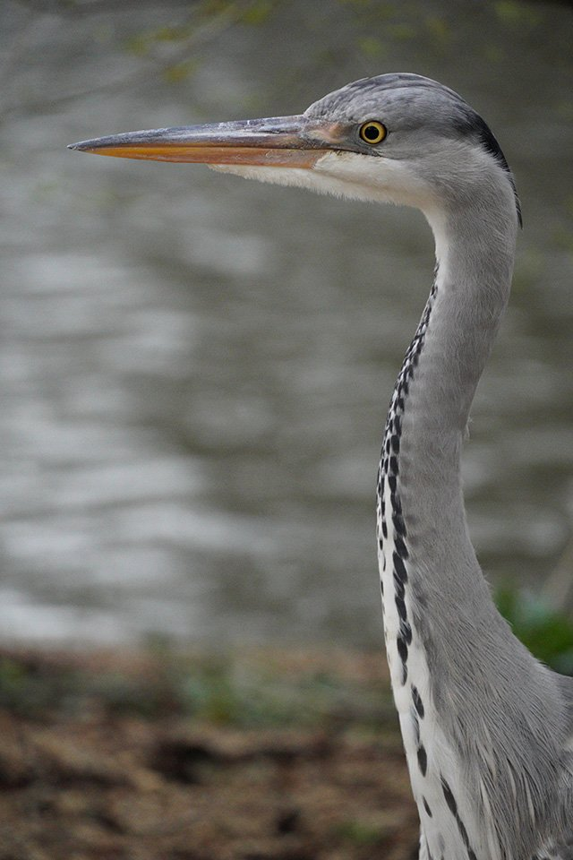 sony a6400 18-135 lens heron in london
