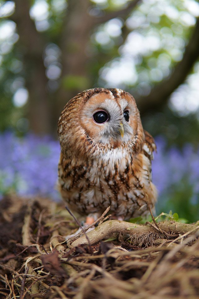 sony a6400 sample tawny owl sigma 30mm
