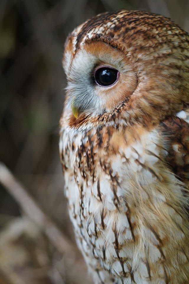 sony a6400 sample tawny owl 90mm macro