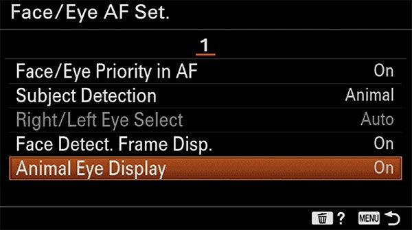 sony a6400 animal eye af setup display