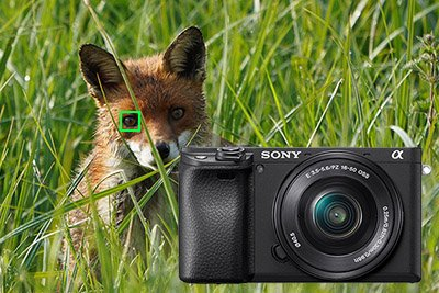 sony-a6400-animal-eye-firmware-update-400px