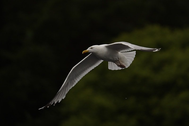 Seagull shot with Sony FE 200-600