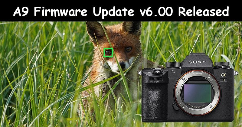 sony a9 firmware v6 update-800px