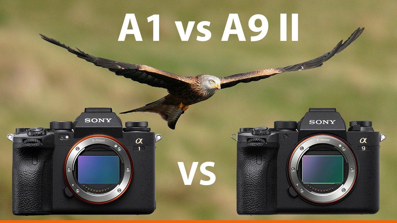 Sony a1 vs a9ii