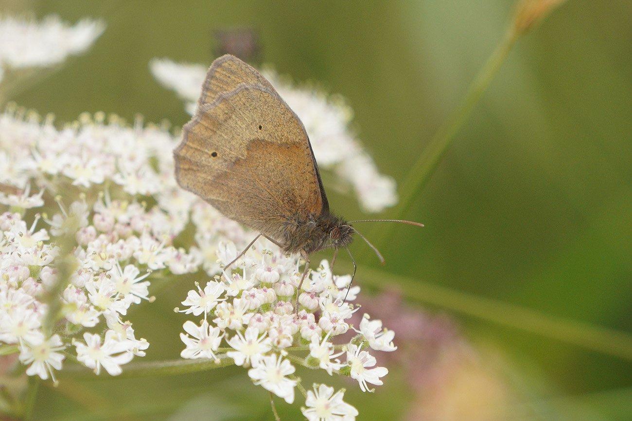 sel100400gm butterfly macro
